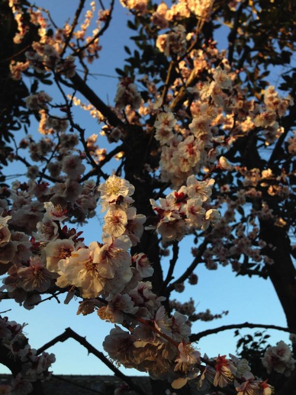 関孝和の墓の近くに咲いていた花